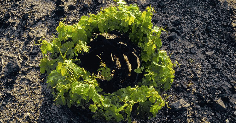 Μπουτάρης Σαντορίνη