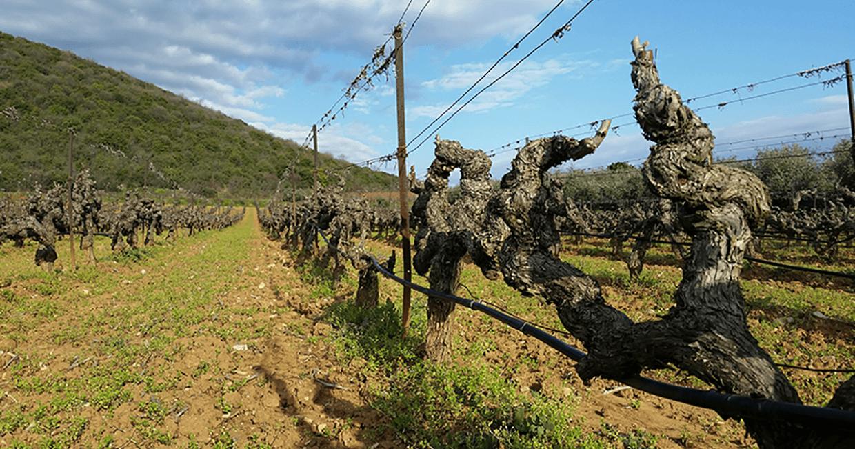 Boutari Winery, Naoussa
