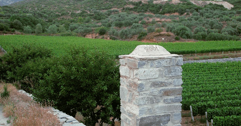 Tsikrikonis Winery, Vineyard
